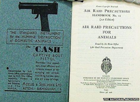 Air Raid Cull