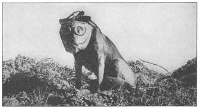 Dog2_ Frances Whiting Halsey