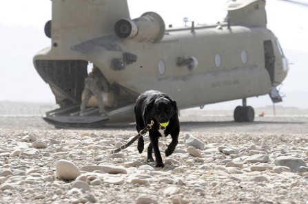 dog7.Australian Department of defense